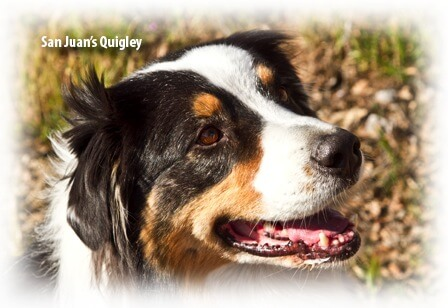 Clavamox® Drops | Santa Cruz Animal Health
