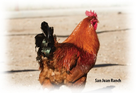 UltraCruz® Poultry Omega Boost Supplement | Santa Cruz
