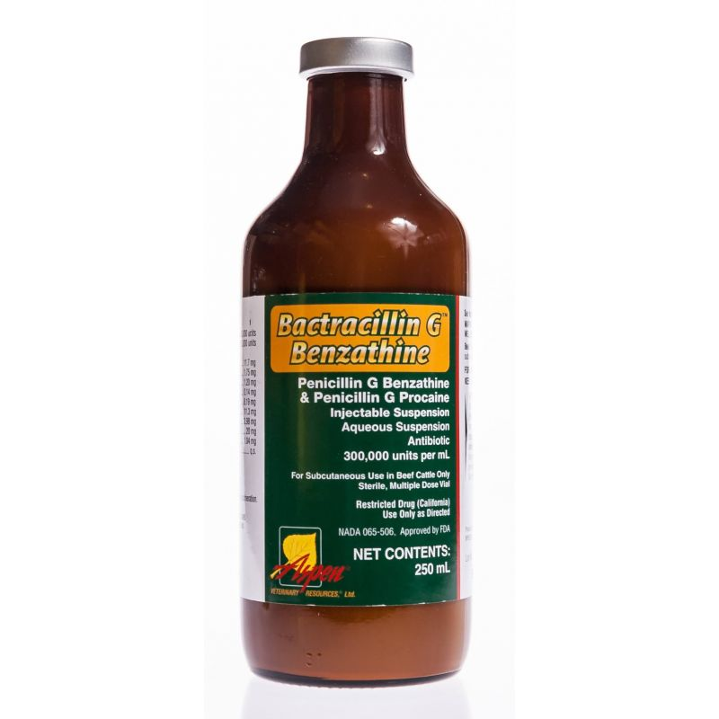 Bactracillin G Benzathine Inj | Santa Cruz Animal Health